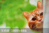 Webp.net-resizeimage-7.jpg - 53kB