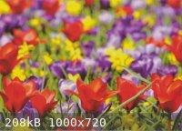 Scan_20200630 (2)_ verkleind.JPG - 208kB